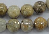 CFC64 15.5 inches 14mm round fossil coral beads wholesale
