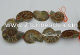 CMM03 15.5 inches 35*45mm - 45*55mm carved ammonite gemstone beads