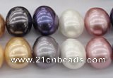 CSB696 15.5 inches 13*15mm oval mixed color shell pearl beads