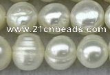 FWP56 15 inches 6mm - 7mm potato white freshwater pearl strands